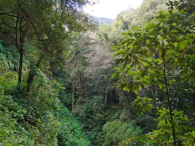 Vista de la laurisilva