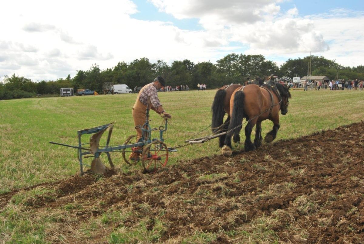 Arado con caballo