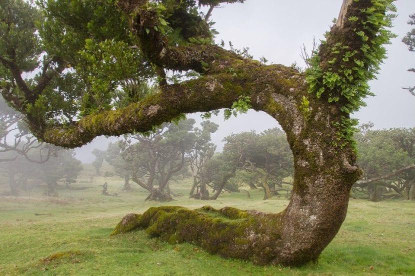 Los bosques laurifolios son cálidos y húmedos