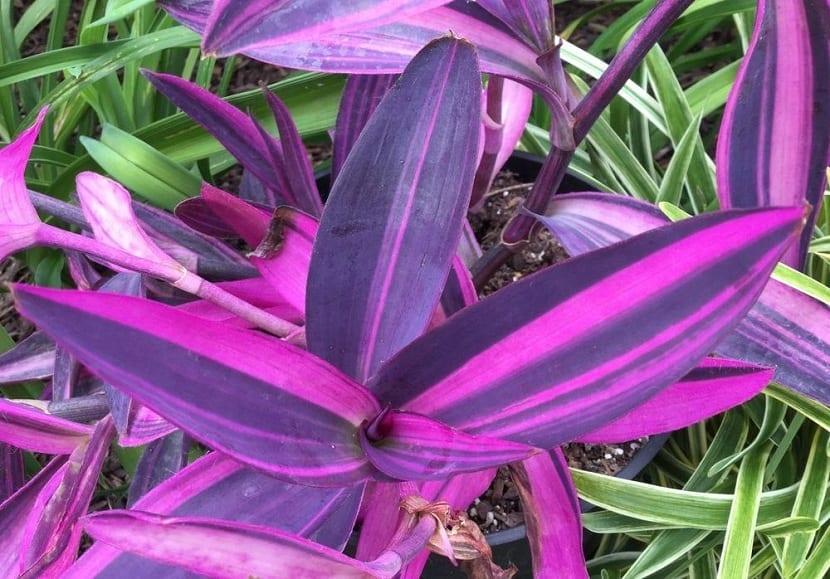 contraste de colores de la purpurina