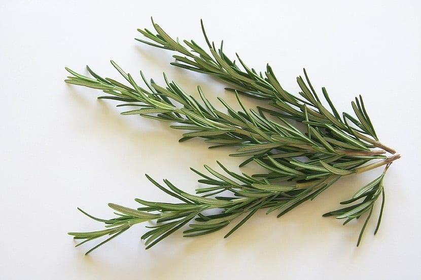 rama de planta aromatica llamada romero