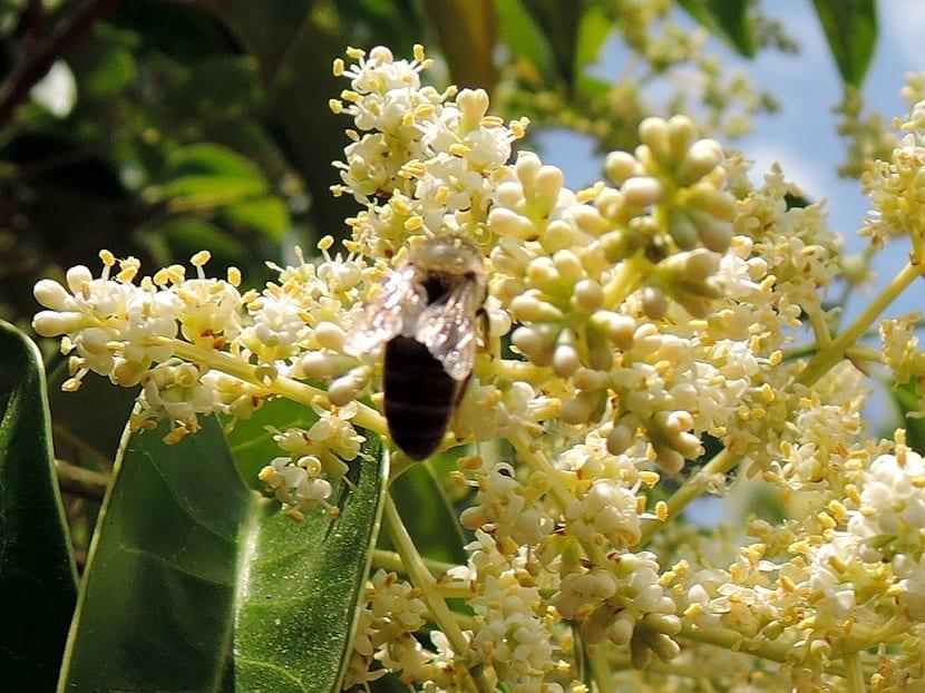 Atracción de insectos polinizadores