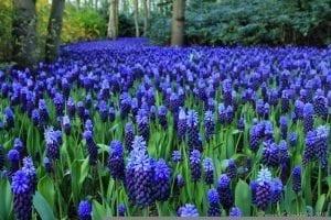 Decoración de jardines con nazarenos