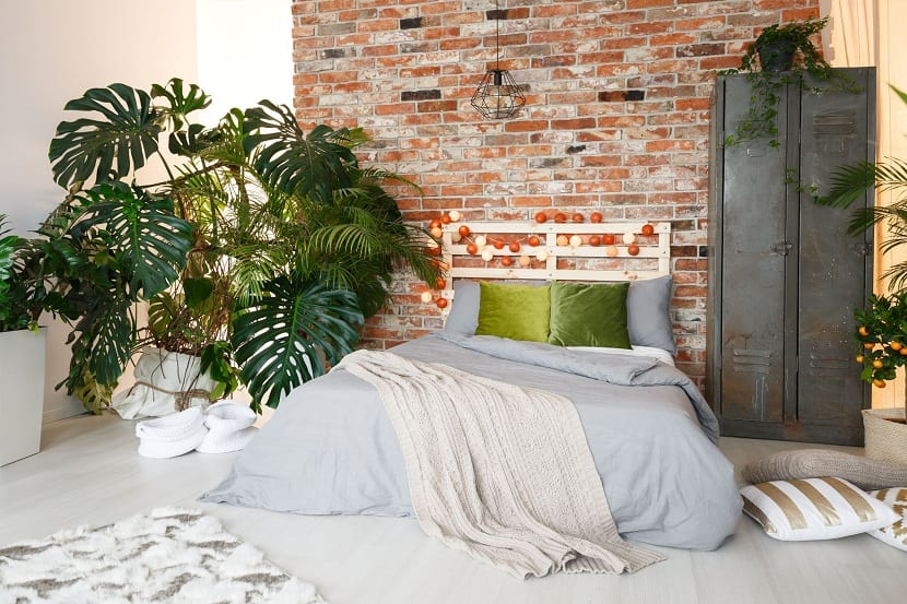Monstera en interiores