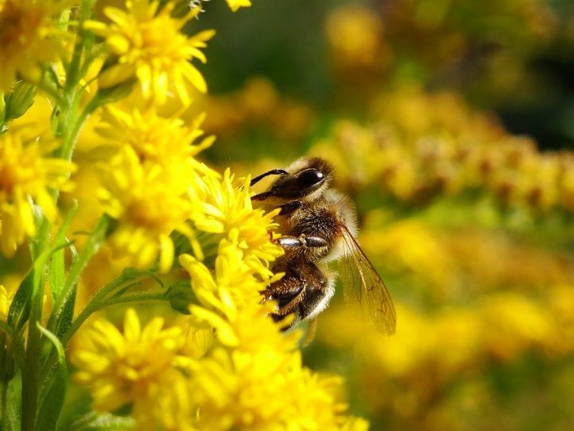 El imidacloprid reduce las poblaciones de abejas