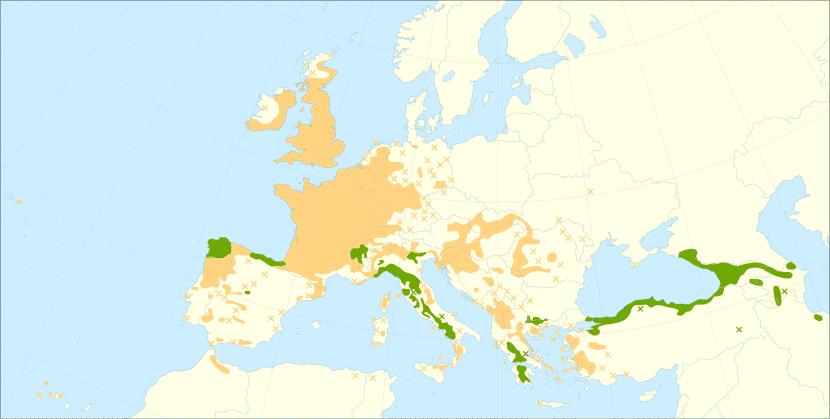 El castaño es originario de Europa