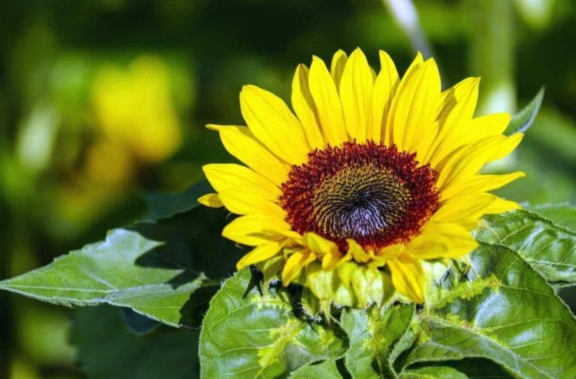 Para que las plantas estén sanas necesitan abono