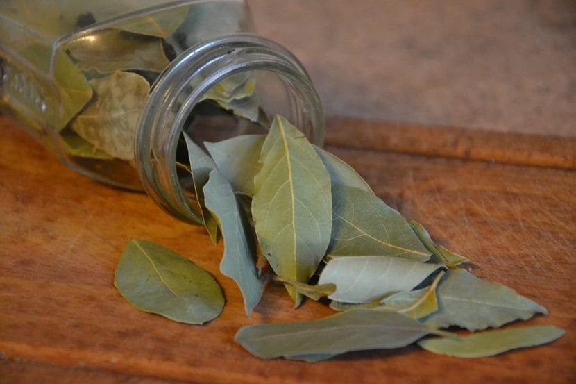 Las hojas de laurel se pueden guardar en botes de cristal