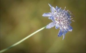 imagen de cerca de una flor con petalos azulados