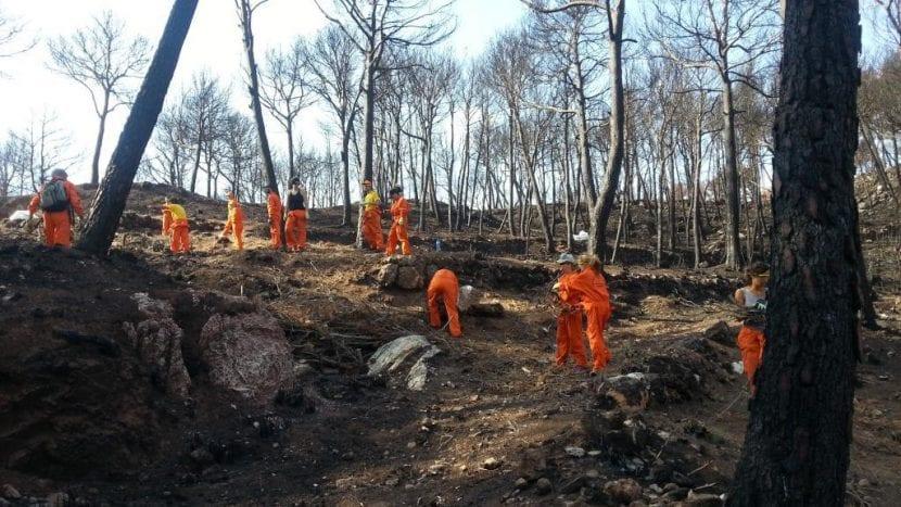 Voluntarios ayudando en las tareas de reforestación