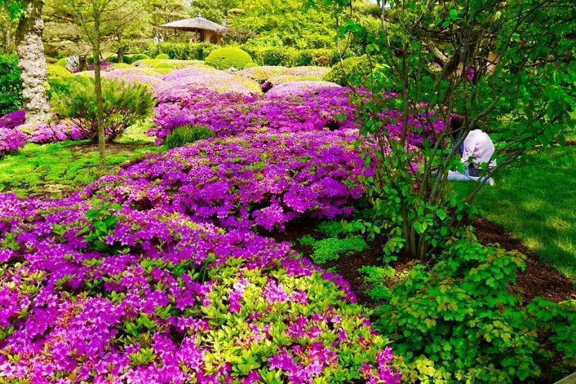 Vista de las buganvillas en un jardín botánico japonés
