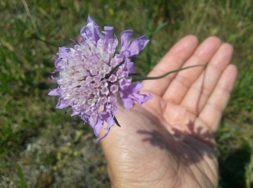mano sujeta una flor de color morada