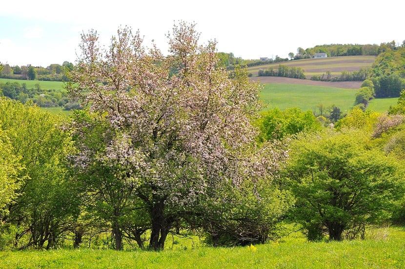 paisaje con arboles llenos de flores