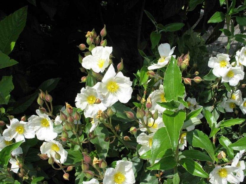 pequeñas flores blancas floreciendo