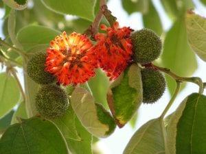 rama de arbol con flores de color rojo