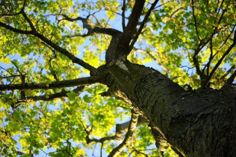 Los árboles suelen ser plantas grandes