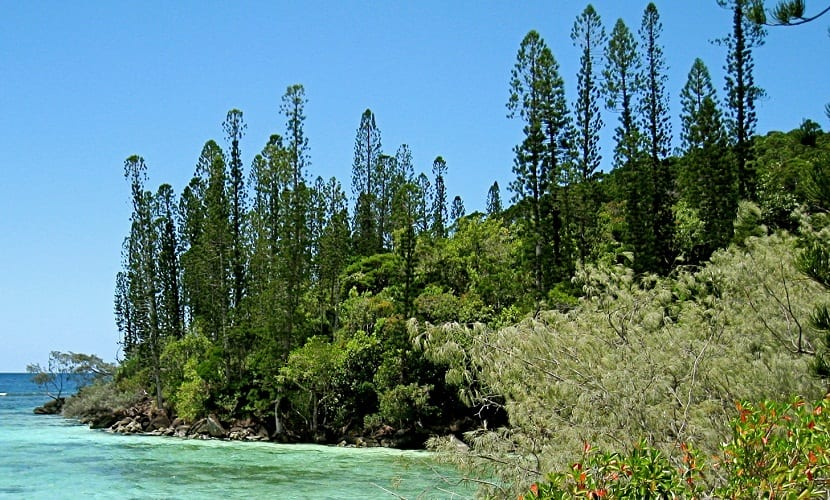 Diferentes arboles verdes al lado de un rio
