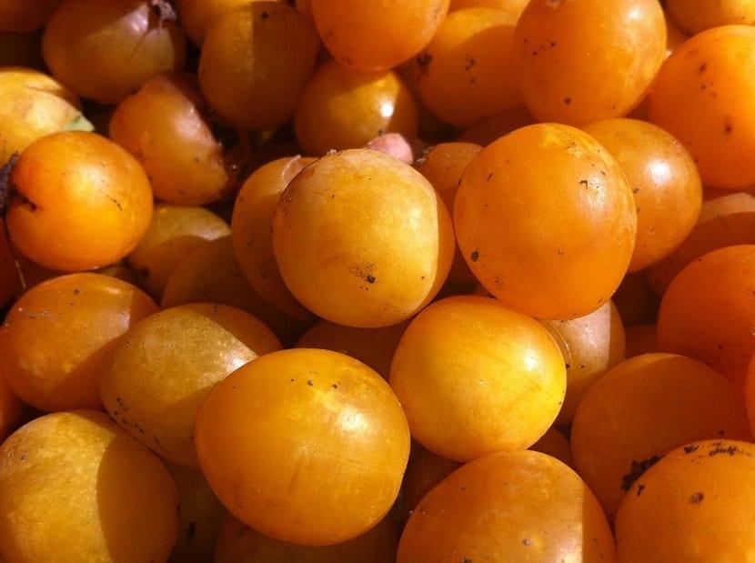 ciruelas de color naranja llamadas claudia