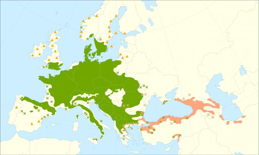 El haya es propio de Europa