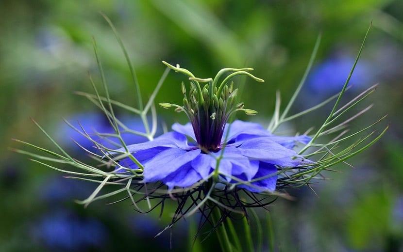 flor de color azul vista de cerca