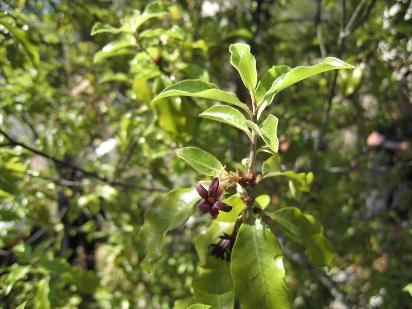 flor de color berengena en rama