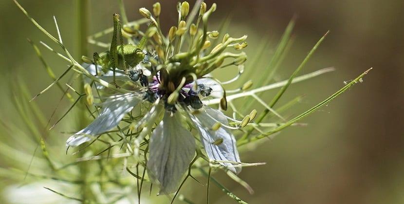 flor seca con los petalos a punto de caerse