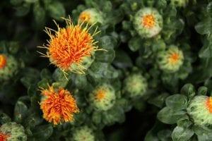 flores abiertas y cerradas de color naranja