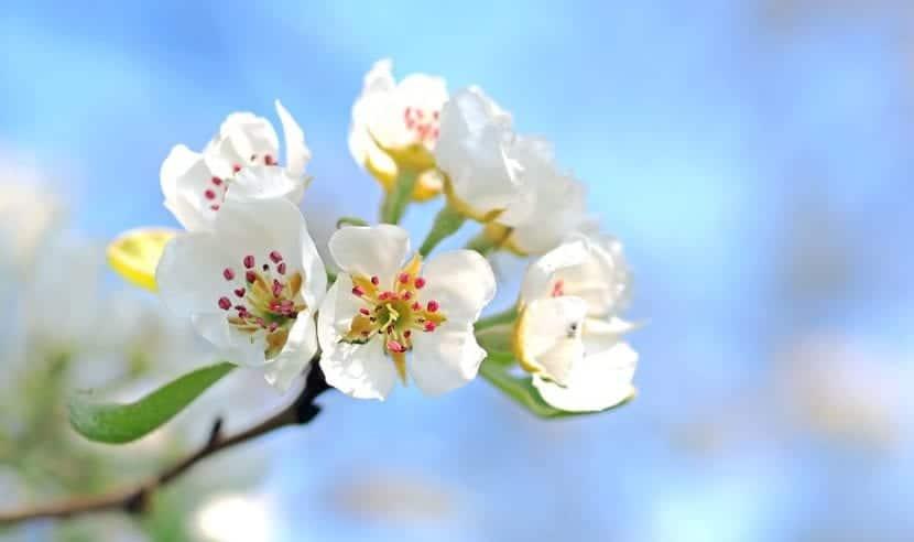 Muchos árboles florecen en primavera