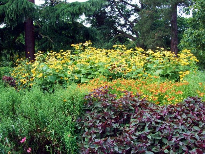 Vista del Jardín de Kew