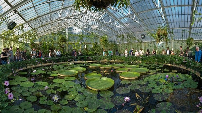 Sección de plantas acuáticas de Kew
