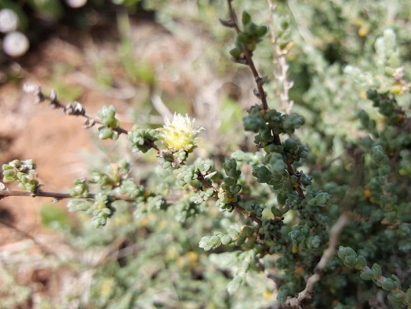 pequeña flor que sale de una rama de un arbusto