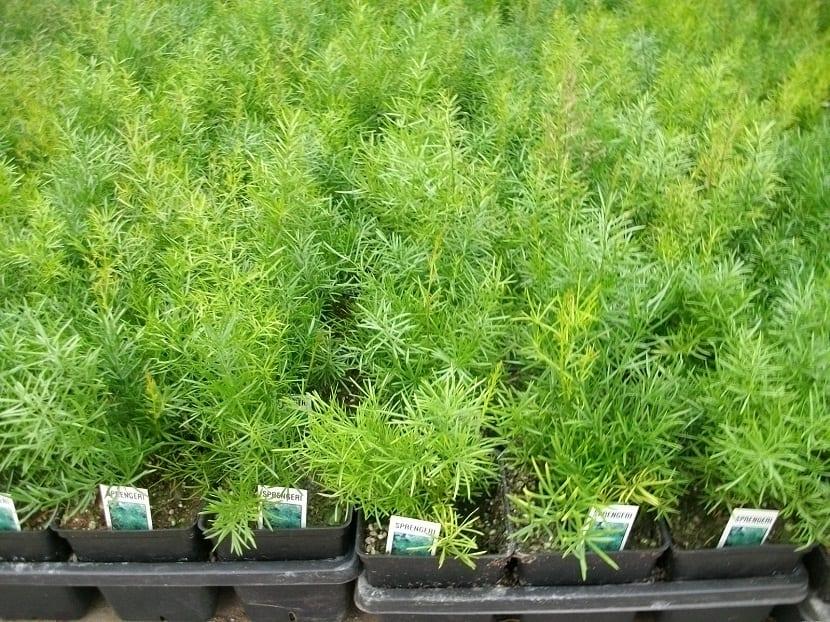 plantas en semilleros para plantar en jardin