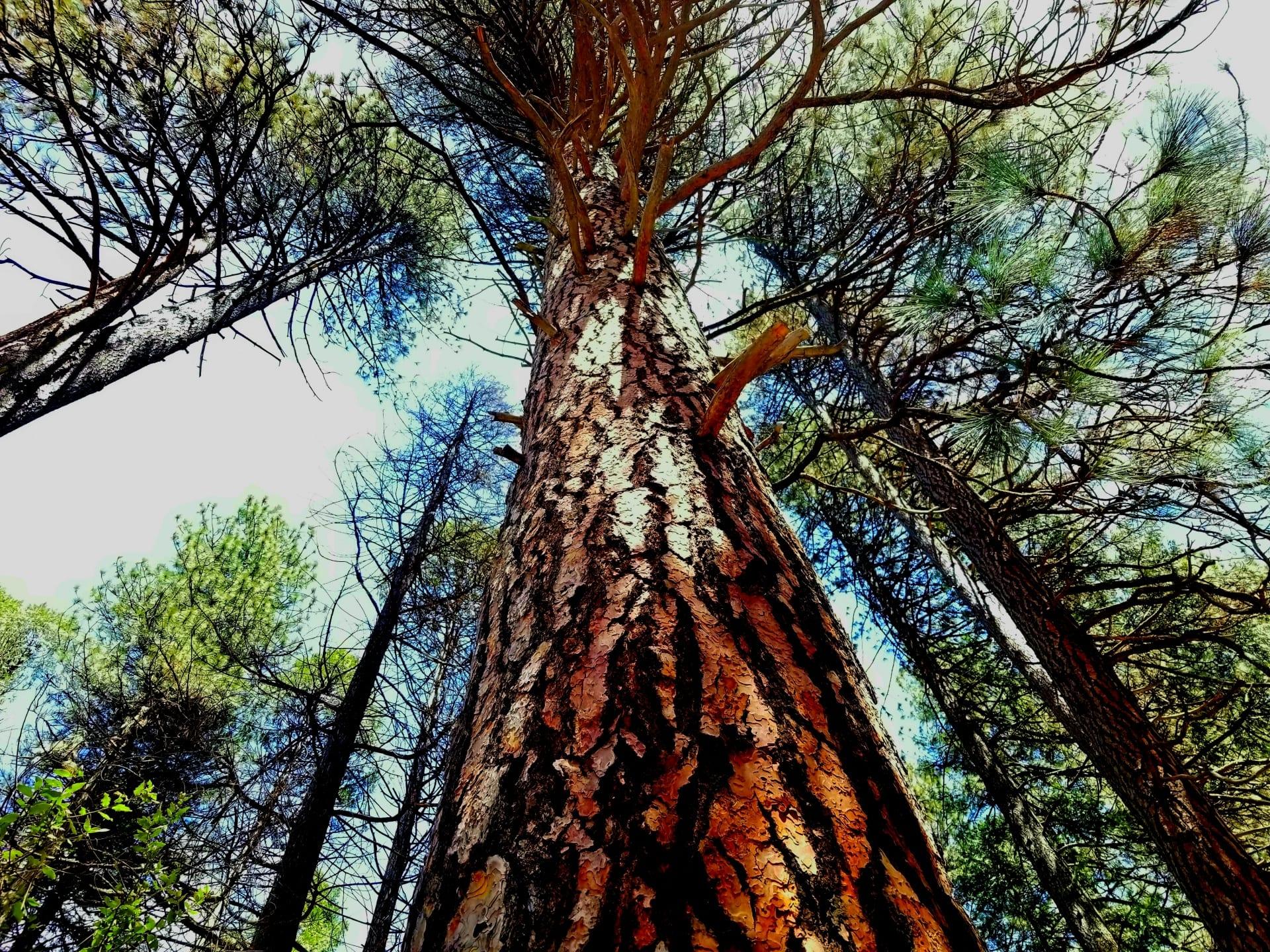 Los árboles pueden ser plantas muy grandes