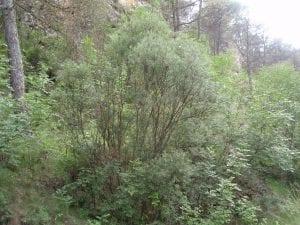 diferente arboles y vegetacion que se puede ver en un bosque