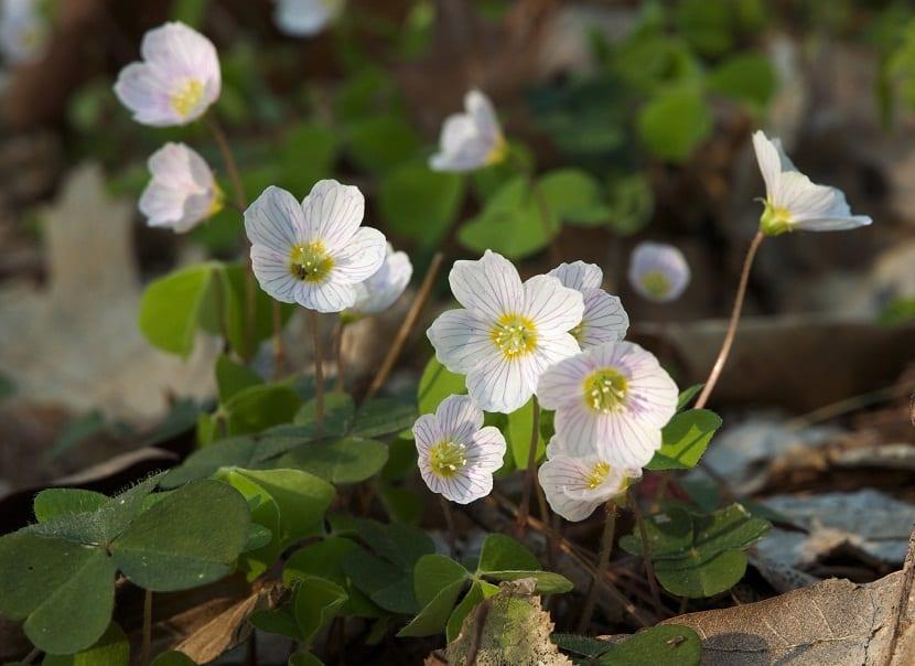pequeñas florecillas de color blanco que sobresalen de un arbusto