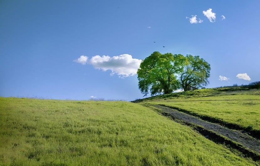 roble en medio de una pradera y entre el azul del cielo