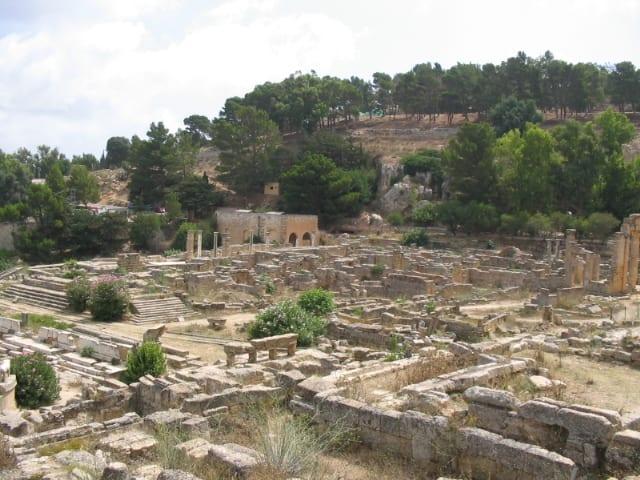 El silfio es una planta medicinal que crecía en el mediterráneo