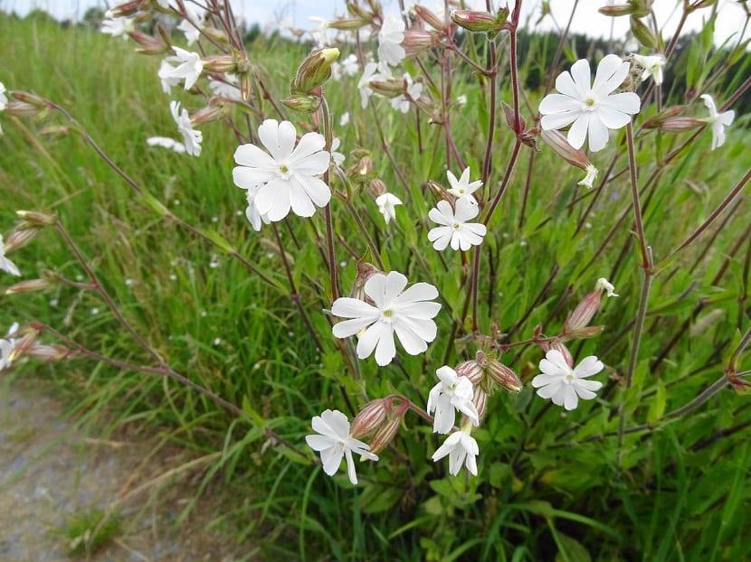 arbusto con flores blancas en medio de un camino