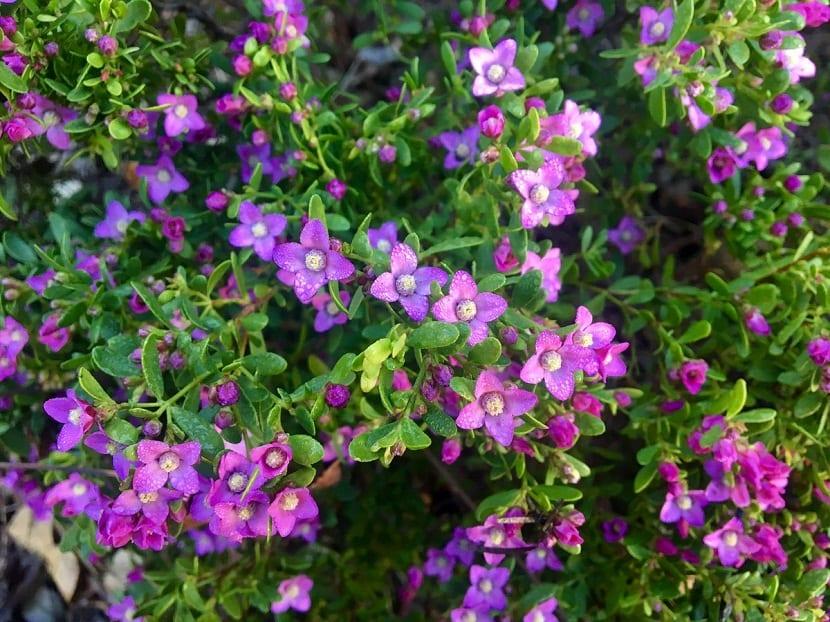 arbusto lleno de flores de color lila
