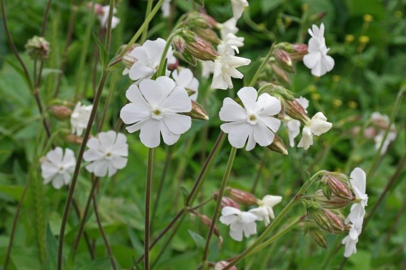 bonitas flores de color blanco con petalos en forma de corazon