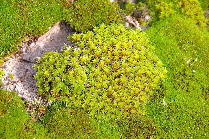 diferentes tipos de musgo que estan pegados a una roca