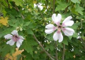 dos flores con los petalos abiertos entre hojas verdes