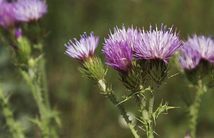 flores silvestrs con unos tallos de espinas y colores vivos
