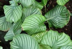 hojas mojadas con los bordes secos