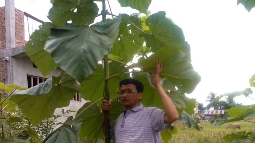 hombre sujetando rama de arbol con hojas grandes
