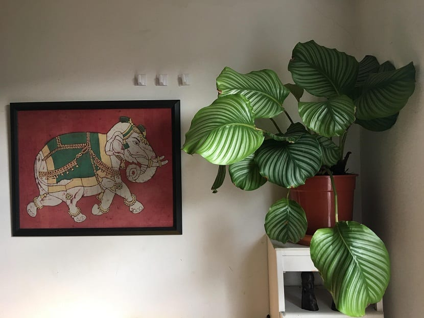 maceta con planta de hojas grandes en una sala