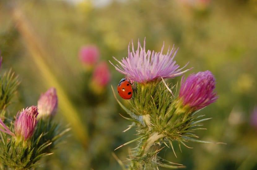 mariquita ubida en una flor de colores alegres y vivos