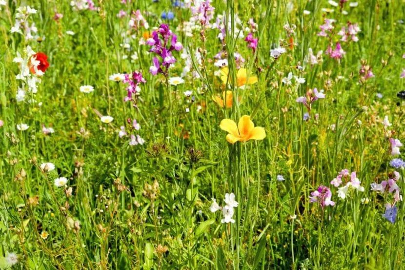 Cuantas más flores distintas haya, más polinizadores habrá
