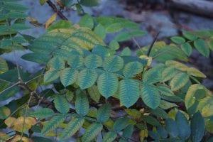 rama de arbol llena de hojas de color verde