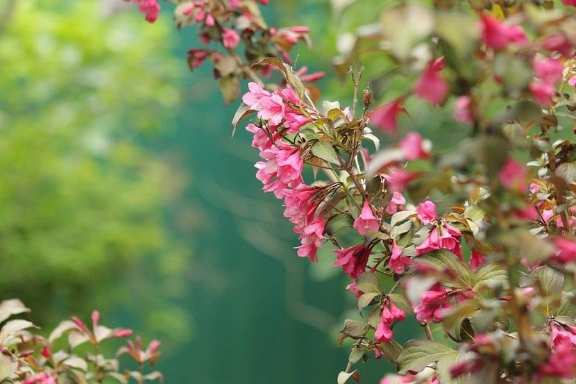 rama de arbusto con flores parecidas a las campanillas